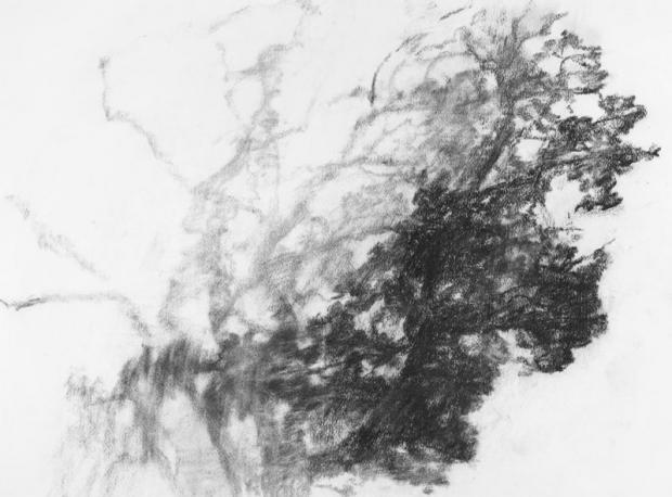 Chêne Taille - 50x65 cm Technique - fusain Date - 2008