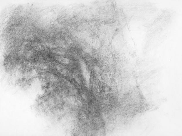 Chêne vert I Taille - 50 x65cm Technique - fusain Date - 2008