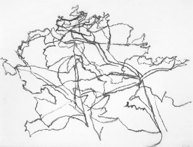 Chêne Taille - 45X63 cm Technique - fusain Crédits photo Illés Sarkantyu